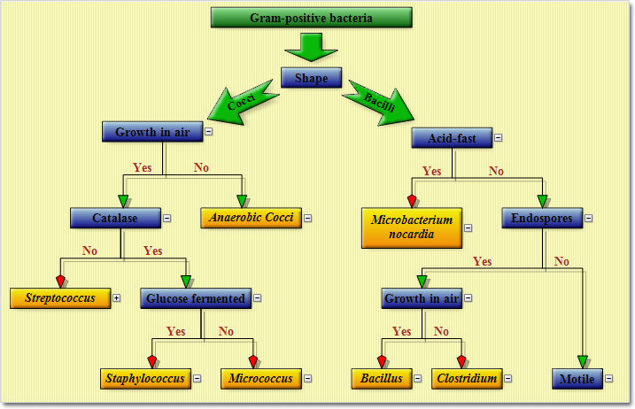 July 2014 mindfusion company blog a sample diagram ccuart Image collections