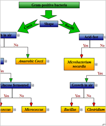 WinForms Classification Chart